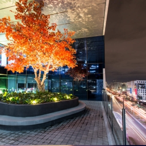 ASYA Design Projects - Scape, Orange Tree