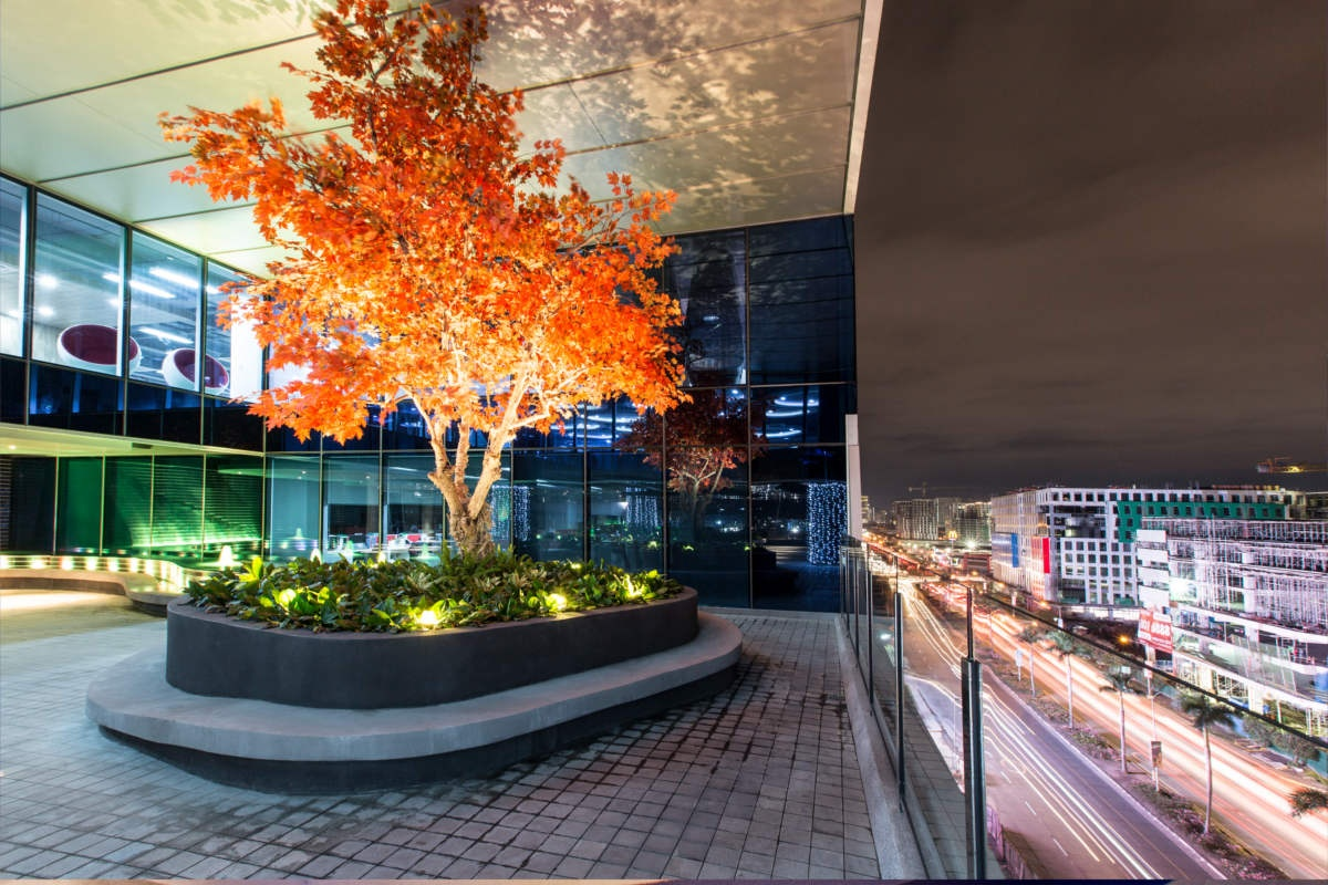 ASYA Design Projects - Scape, Orange Tree